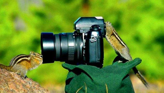 动物们和相机独处时(多图)