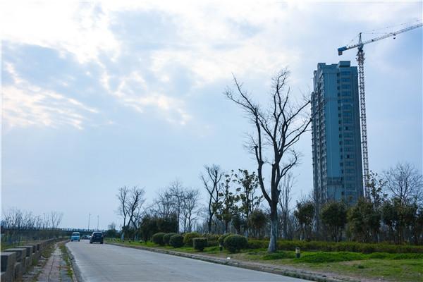 御水龙庭 淮河堤坝 201804